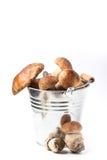 Seau de champignons de cèpe Photographie stock libre de droits