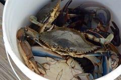 Seau de crabe Photographie stock