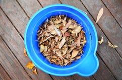 Seau de feuilles photographie stock