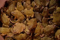 Seau de grenouilles à vendre photos stock