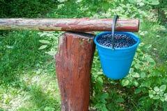 Seau de myrtilles accrochant sur un poteau en bois images libres de droits
