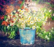 Seau de vintage avec des marguerites au-dessus de fond de jardin de fleurs Rétro type photographie stock