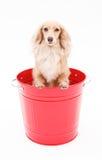 Seau et chiens image libre de droits
