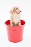 Seau et chiens photographie stock