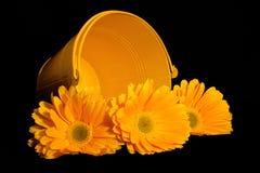 Seau jaune de Gerber Photo stock