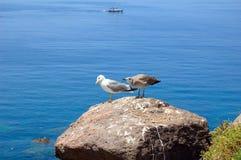 Seaugull Fotografia Stock Libera da Diritti