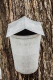 Seaux de sève d'érable sur des arbres au printemps Image libre de droits