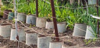 Seaux et jeunes plantes perméables Photos libres de droits