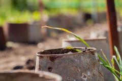 Seaux et jeunes plantes perméables Photo stock