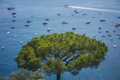 Seaview de côte de Positano Amalfi avec le pin images stock