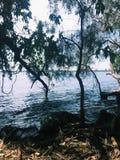 Seaview durch Bäume Lizenzfreies Stockfoto