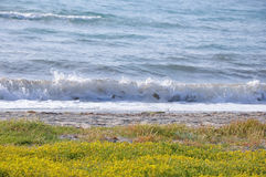Seaview med stranden i våren, Aegean region av Turkiet Arkivbild