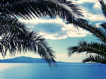 Seaview through the palms. Sea and sky view through the palms. Croatia stock images