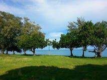 Seaview. Sea grass tree Royalty Free Stock Photos