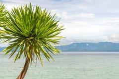 Seaview z drzewkiem palmowym, wyspą i chmurnym niebem, Fotografia Stock