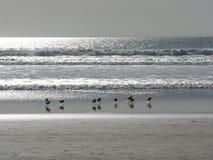 Seawaders 免版税库存图片