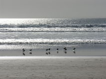 Seawaders Royalty Free Stock Images