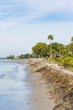 Seawall and Palm Tree on Beach Stock Photo