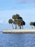 Seawall with palm trees Royalty Free Stock Photos