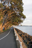 Seawall & Trees Royalty Free Stock Images