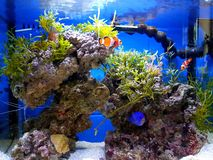 Seawater aquarium stock photography