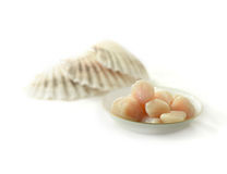 Seawater Scallops. Thawing frozen seawater scallops with scallop shells in the background against white. Copy space stock image