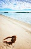 seaweed пляжа совершенный Стоковое Изображение RF