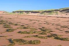 seaweed пляжа Стоковое Изображение