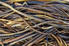 seaweed пляжа Стоковое Изображение RF