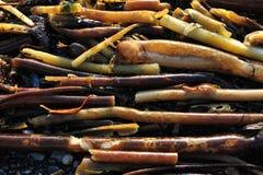 seaweed пляжа Стоковые Изображения RF