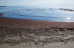 seaweed пляжа песочный Стоковое фото RF