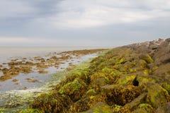 seaweed fotos de archivo