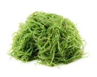 seaweed fotografia de stock