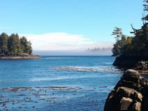 seaweed royaltyfria bilder