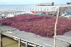 seaweed Imagenes de archivo