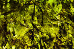 Seaweed. Dried seaweed background texture image Royalty Free Stock Photo