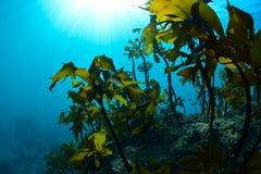 seaweed imagens de stock