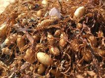 seaweed Fotos de archivo libres de regalías