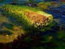 seaweed imágenes de archivo libres de regalías
