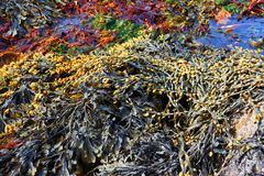 Free Seaweed Stock Photo - 9692950