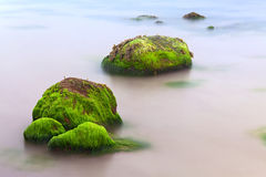 Seaweed algae on boulder like paradise island Royalty Free Stock Photo