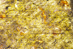 Seaweed background. Royalty Free Stock Images
