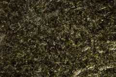Seaweed background texture Stock Photos