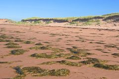 Seaweed Beach Stock Image