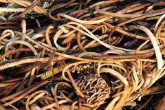 Seaweed on beach Stock Photo