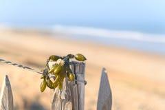 Seaweed at the beach Royalty Free Stock Image
