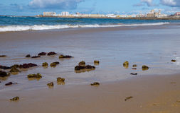 Seaweed on the beach of Cadiz Stock Photos