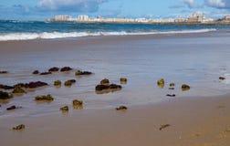 Seaweed on the beach of Cadiz stock photos