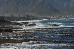 Seaweed beds in Hermanus. The town of Hermanus is a beautiful seaside resort in the Western Cape area of South Africa. It's about an hour's drive from Cape Stock Images
