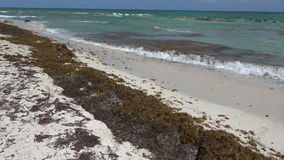 Seaweed Bloom on Beach. Notice the seaweed bloom washed up on this beach setting and the smooth pan/tilt camera movement to the horizon stock footage